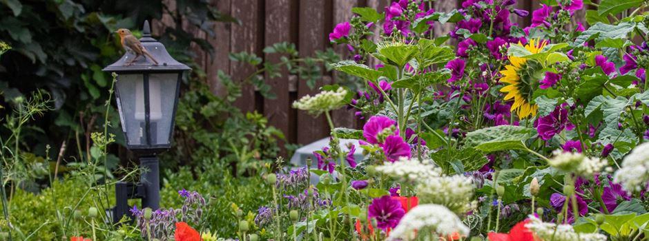 Fotowettbewerb: Die Gemeinschaft für Natur- und Umweltschutz / GNU sucht Naturnahe Gärten in Herzebrock-Clarholz