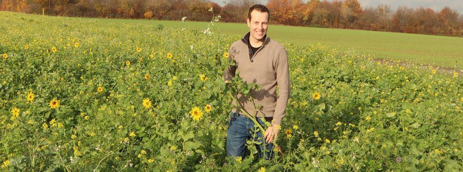 Niederkasseler Landwirte legten 18 Hektar blühende Zwischenfrüchte an