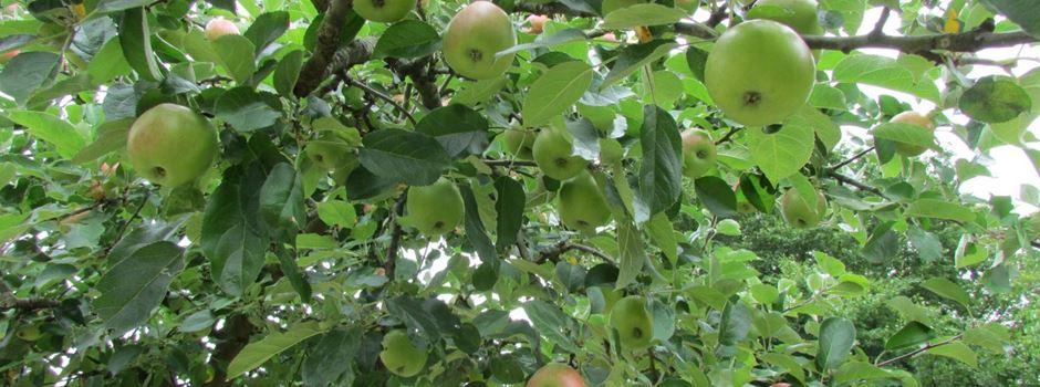 Obstsorten bestimmen lassen und Bäume bestellen
