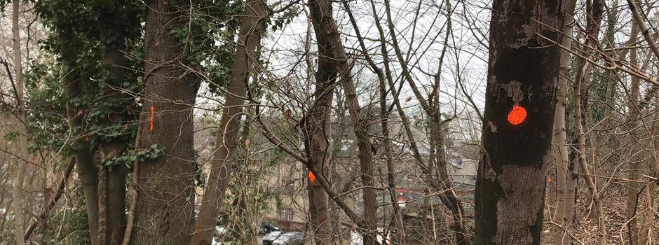 Über 140 Bäume müssen gefällt werden