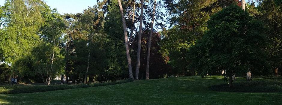 Stadt Mainz lässt mehr als 300 Bäume fällen