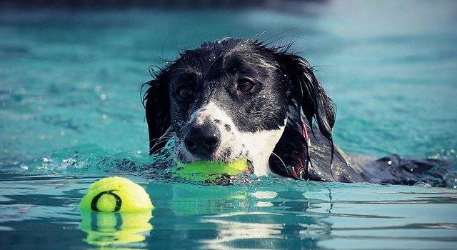 Bello's Batschlach: Hundebadetag im Augsburger Plärrerbad