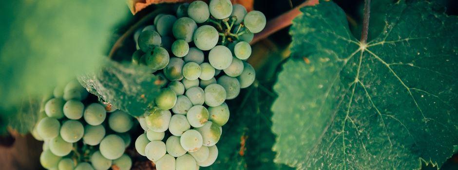 Braucht der Wein Schwermetall?