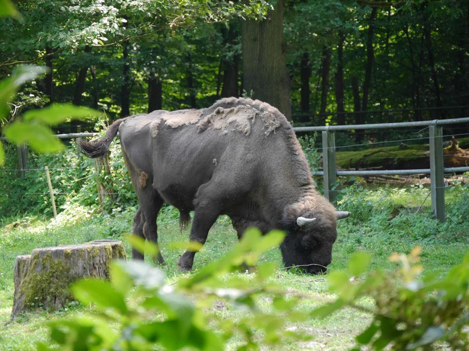 Tierpark mainz kastel