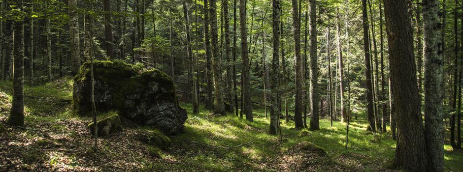 Menschlicher Knochen im Wald gefunden