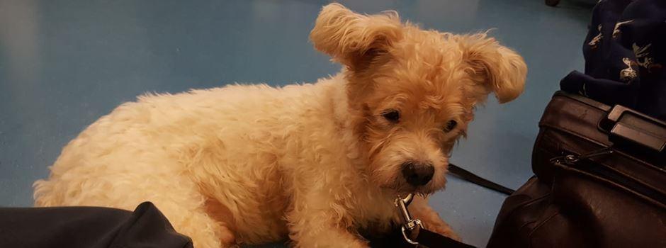 Wie aus Fundhund Teddy kurzzeitig ein Polizeihund wurde
