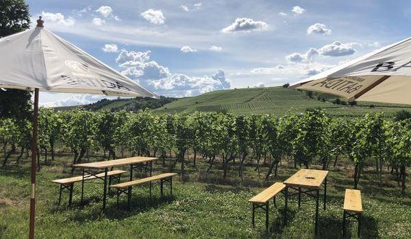 Neue Shisha-Bar in den Weinbergen
