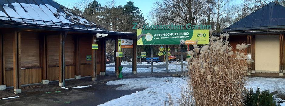 Zoo Augsburg: Lockdown bei Schimpanse, Gürteltier und Co.