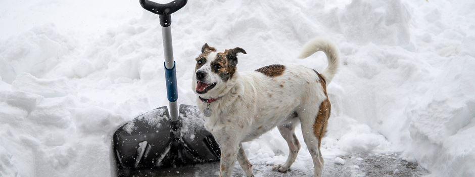 Winterdienst: Stadt Soltau weist auf Bestimmungen hin