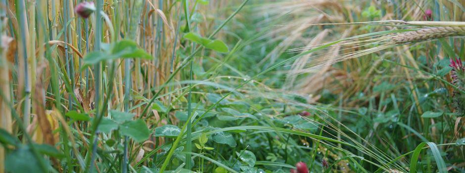 Für mehr Biodiversität in der Landwirtschaft