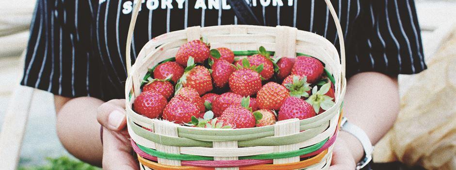 Erdbeerfelder in und um Augsburg – 21 Felder zum Selbstpflücken