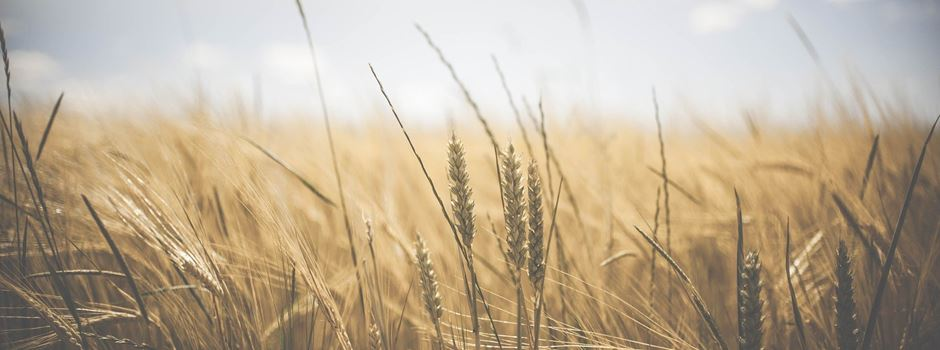 Regionale und moderne Landwirtschaft