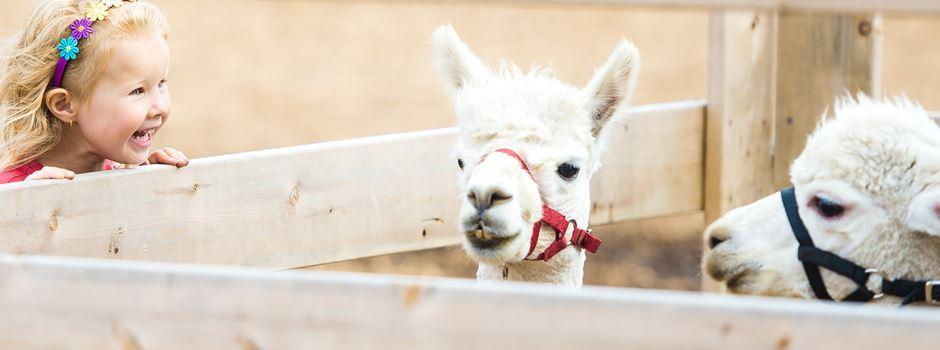 5 Orte, an denen ihr mit Kindern  Tiere besuchen könnt