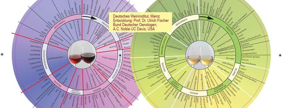 Aromen im Wein und typische Rebsorten Rheinhessens