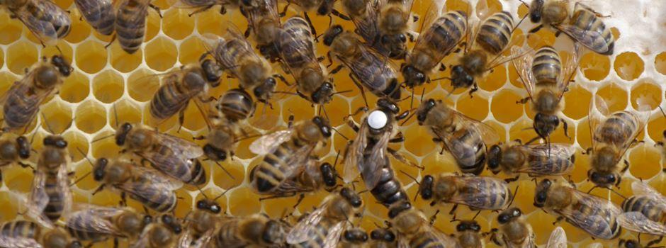 Warum auf dem Dach eines Wiesbadener Hotels Bienen wohnen