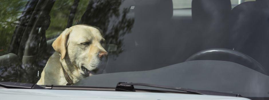 Zustand kritisch: Hund bei über 30 Grad aus heißem Auto gerettet