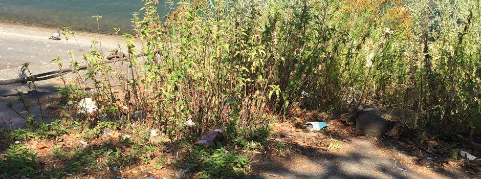 Rhine-Cleanup-Tag: Schwerpunkt liegt auf Zigarettenkippen
