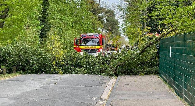 Sturm in Mainz: Baum fällt in Wildpark um