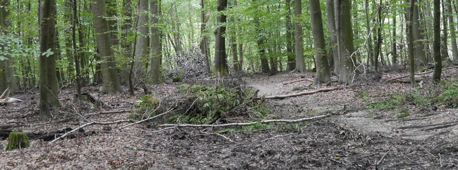 """Sturmtief """"Sabine"""": Mehrere Grünflächen geschlossen"""