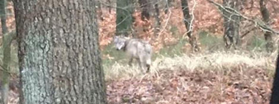 """""""Die den Wolf knipst"""""""