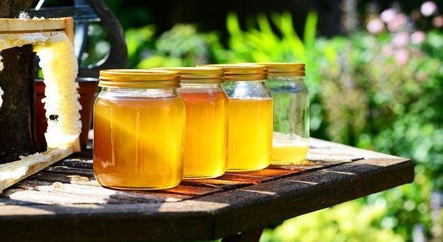 Bio-Honig aus Augsburg: Hier bekommt ihr ihn