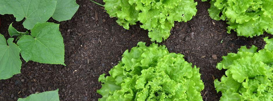 Urban Gardening – 7 Gärten in Augsburg, an denen Du selbst anpflanzen und ernten kannst