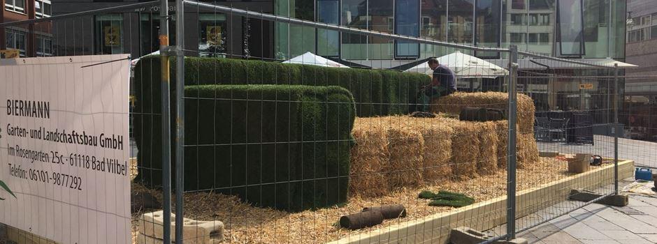 Warum ein Sofa aus Gras auf dem Mauritiusplatz steht