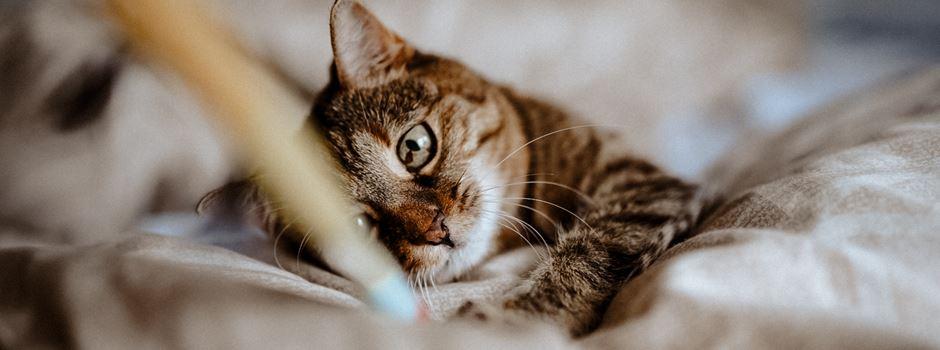Ihr habt gewählt: Das ist Niederkassels süßeste Katze!
