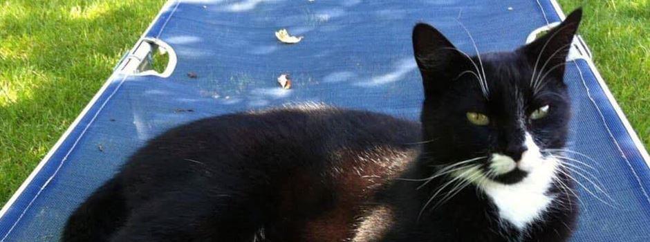 Katzen-Entführung in Affing – Kater Feli immer noch vermisst