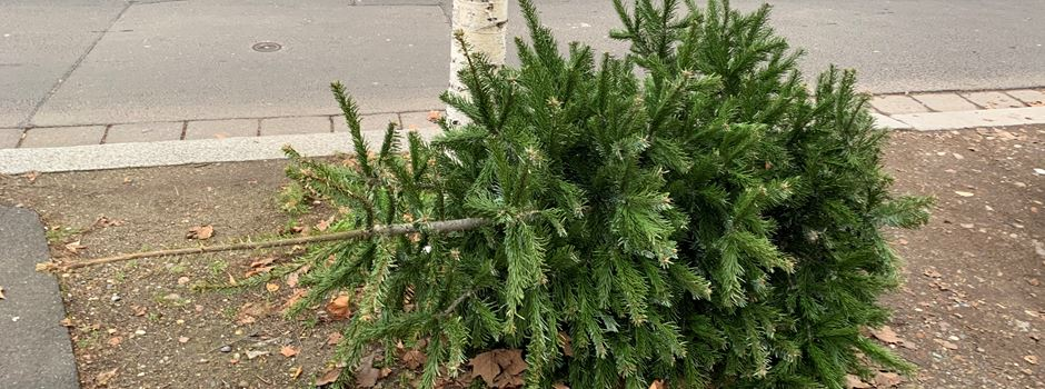 Wann die Weihnachtsbäume eingesammelt werden