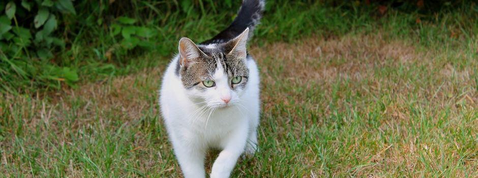 Freigänger Katzen in Herzebrock-Clarholz müssen kastriert werden