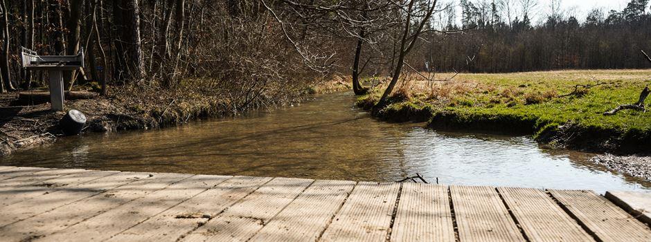 Stadtwald erleben – 9 Hallo-Tipps für Naturfreunde