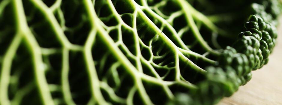 Heimische Superfoods – 7 regionale Vitaminbomben der Wintersaison