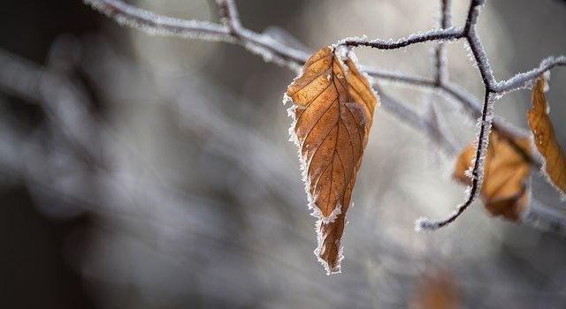 Freiwillige für Kältebuseinsatz: In Augsburg soll niemand erfrieren