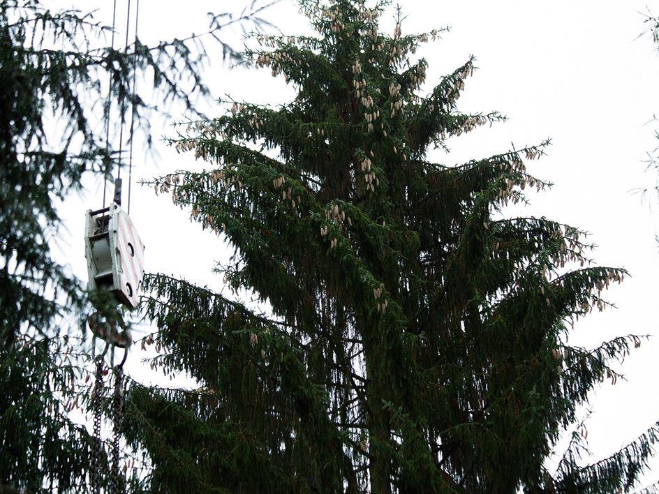Weihnachtsbaum Frankfurt.Das Ist Der Diesjährige Frankfurter Weihnachtsbaum