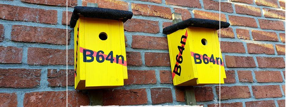 Leserbrief: Für- und wider B64n