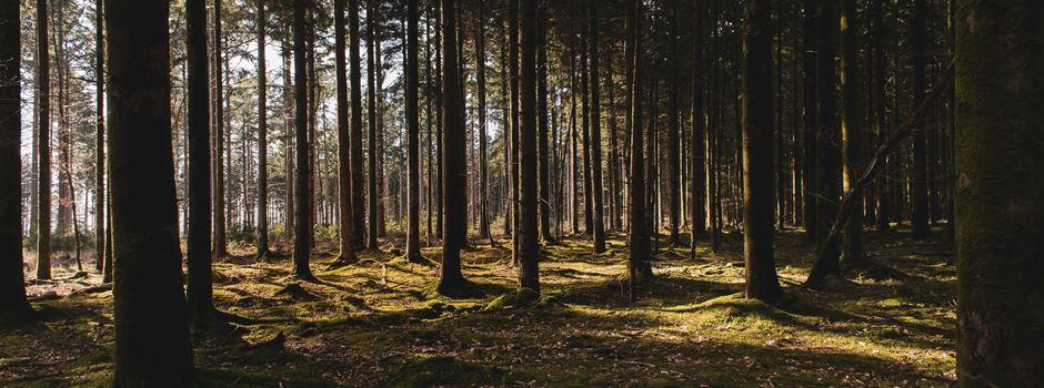 Ein Zelt am Moritzplatz zeigt uns den Wald der Zukunft