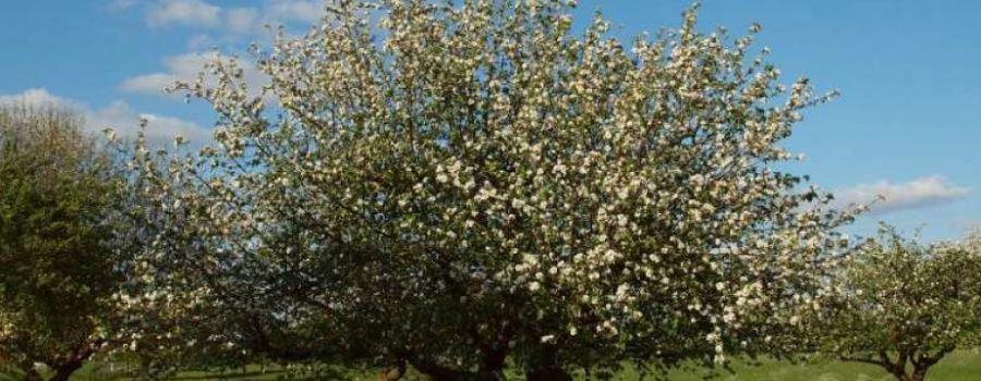 Herzebrock-Clarholz soll erblühen!