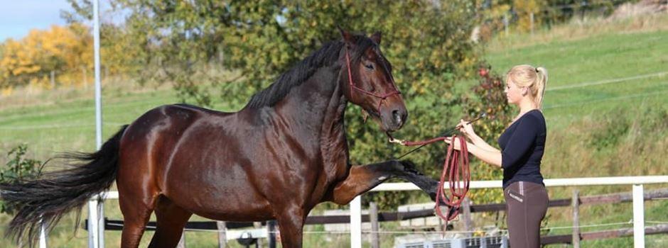 Lisa Schmidt: Über zufriedene Pferde im Reitsport