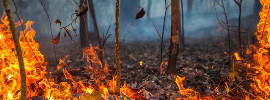 Schon jetzt Waldbrandgefahr in Wiesbaden