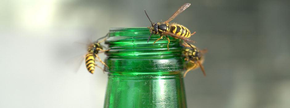 Kommt in diesem Sommer noch die Wespen-Plage?
