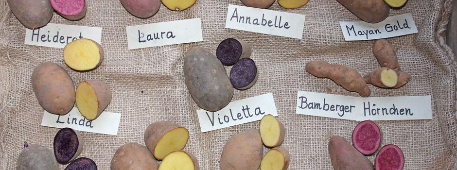 BUND bietet Kartoffelvielfalt