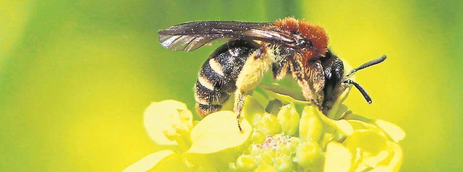 """Bündnis will """"Bienen und Bauern retten"""""""