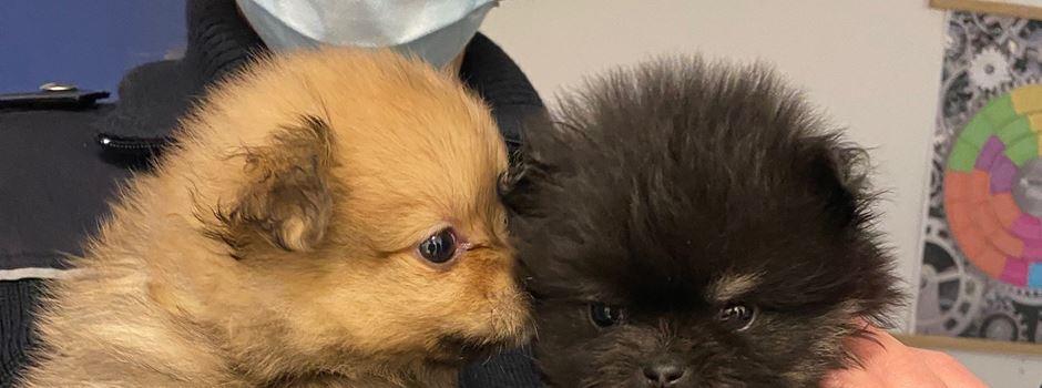 Polizei rettet Hundewelpen aus Wohnung