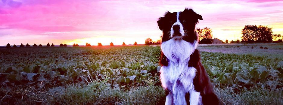 Die schönsten Hundefotos aus Niederkassel
