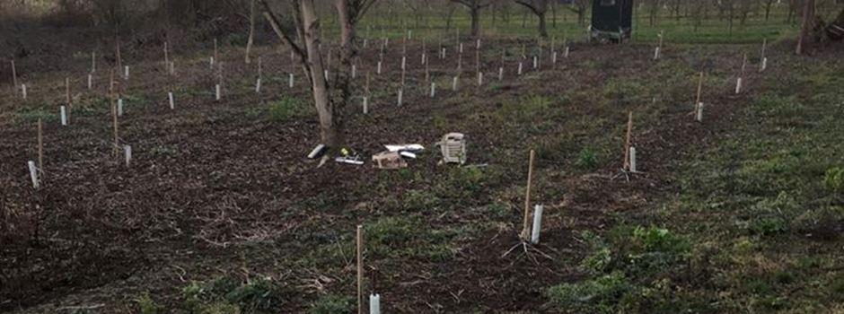 Hütte abgebrannt, Bäume abgeschnitten: Angriffe gegen Frauensteiner Obstbauer