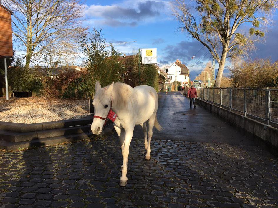 pferd geht spazieren