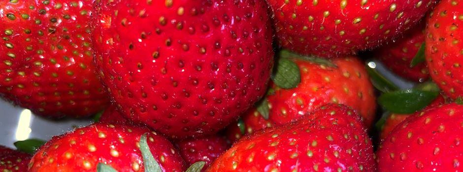 Puls!-Listing: Hier gibt es frische Erdbeeren in Niederkassel
