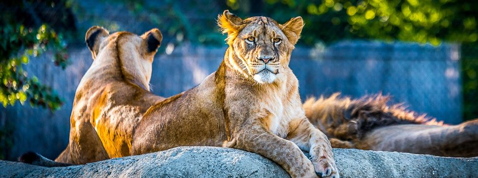 Es wird wild bei der Dschungelnacht im Zoo