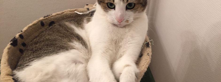 Weltkatzentag: Die schönsten Tiere aus Mainz und Rheinhessen